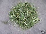 ReadiGrass 500g - FREE POST